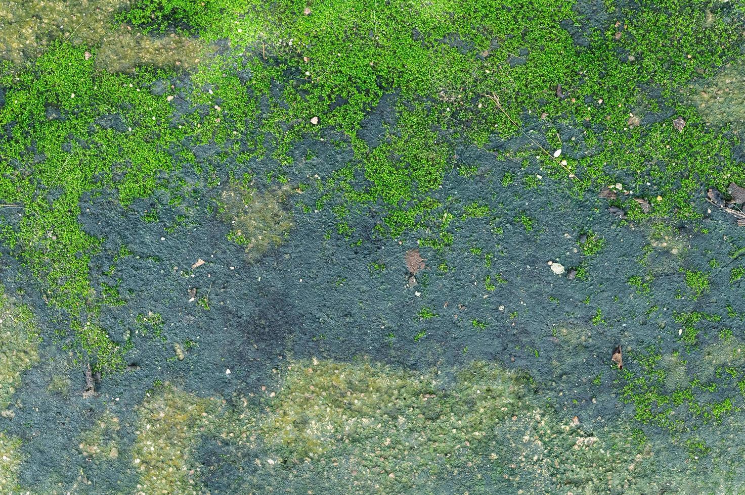 il muschio cresce sul pavimento di cemento. foto