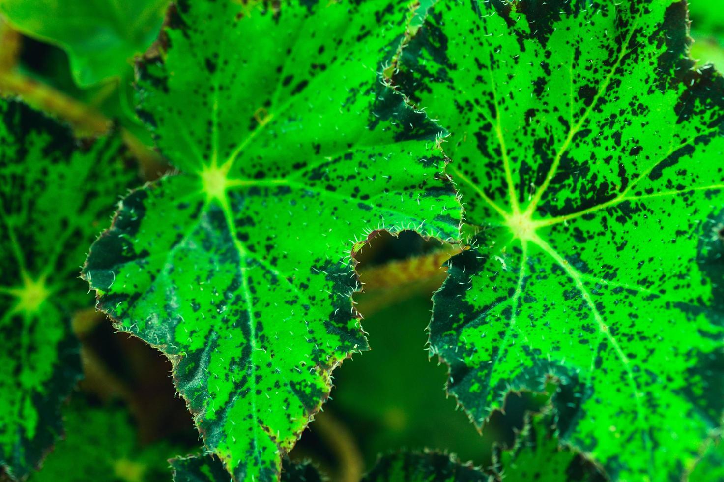 sfondo foglie verdi natura amore paesaggio foto