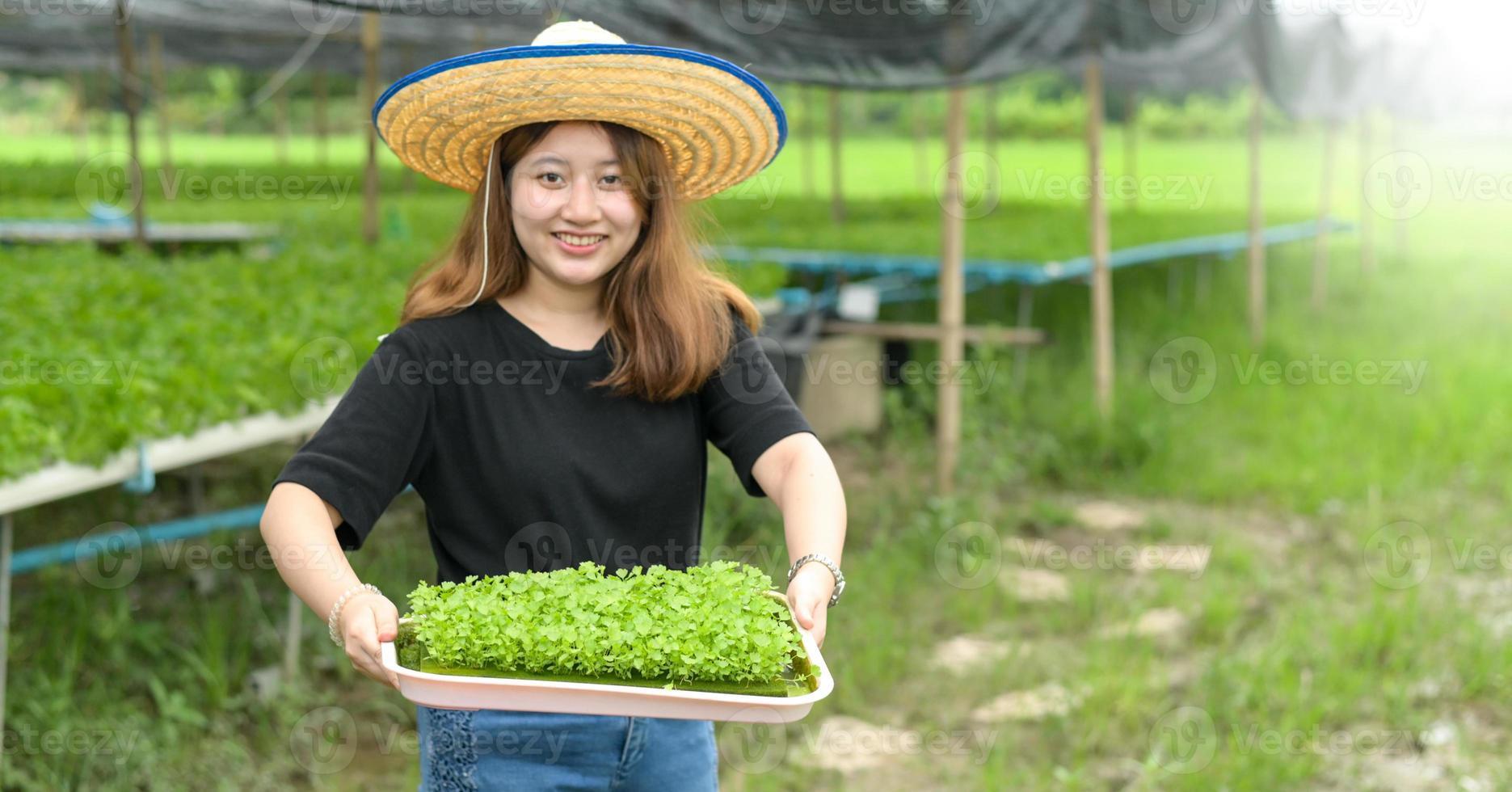 contadina mostra un vassoio di piantine di ortaggi in una serra. foto