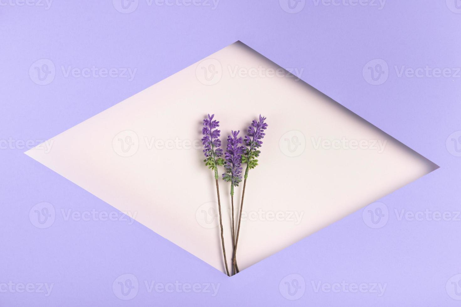 forma geometrica di carta con lavanda foto