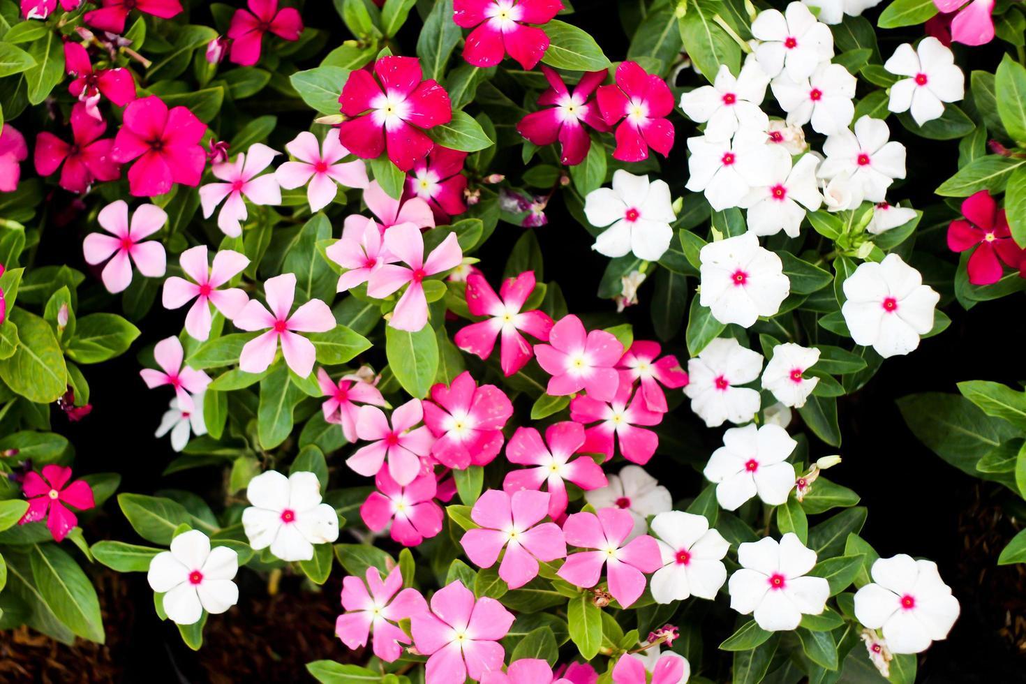 primo piano del fiore, sfondo di piccoli fiori foto