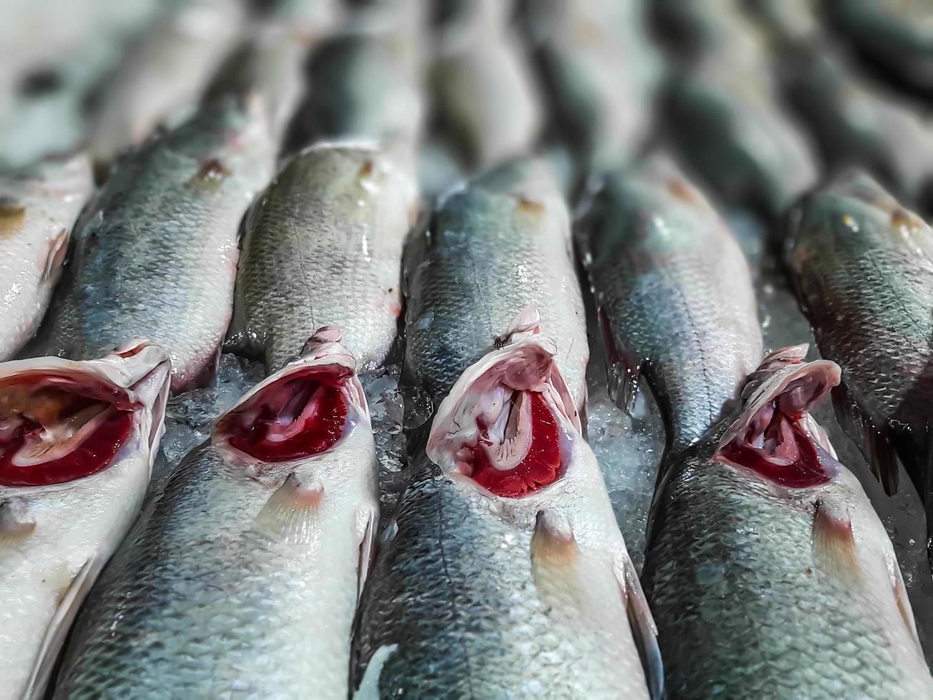 branzino fresco con ghiaccio al mercato del pesce foto