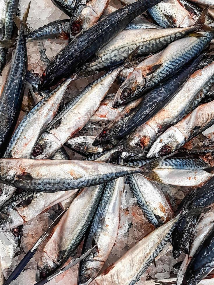 sfondo di pesce fresco su ghiaccio nella bancarella del mercato dei frutti di mare foto