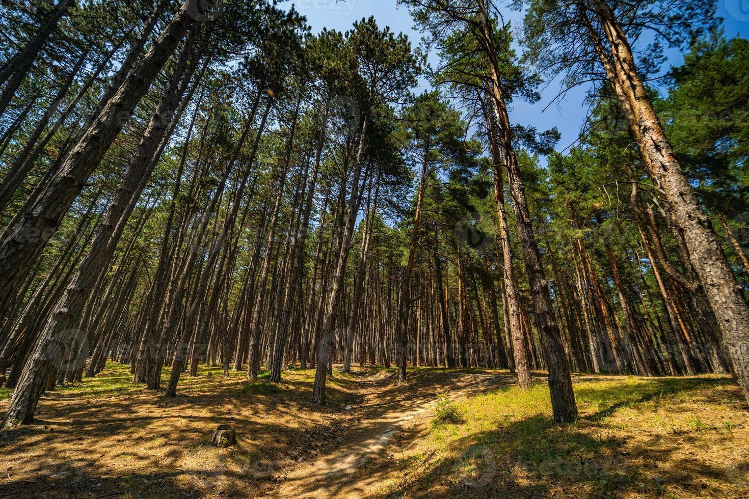 sfondo della foresta naturale foto
