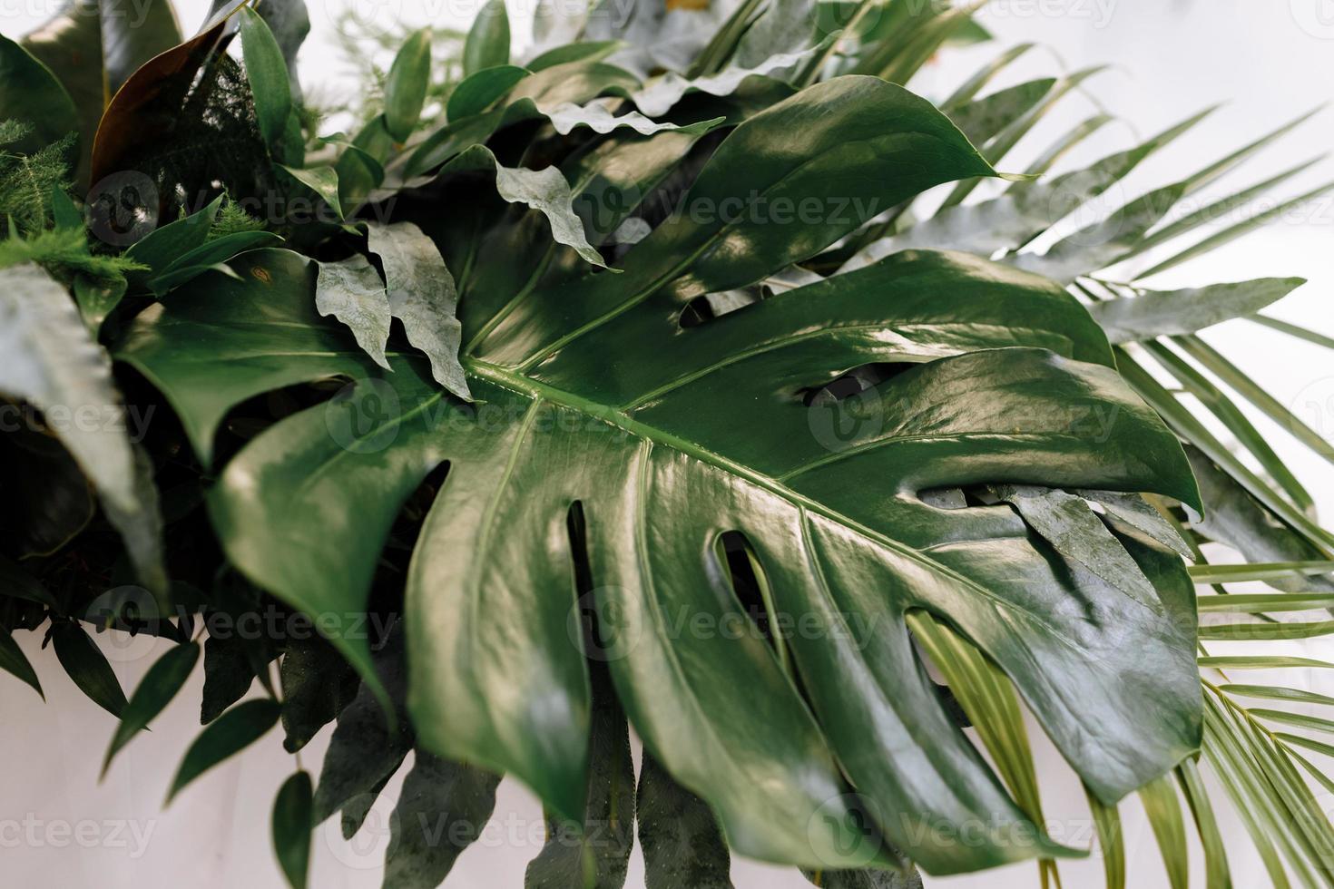 varie foglie verdi esotiche di mostri e palme per il concetto di natura, set di foglie tropicali isolate su sfondo bianco foto