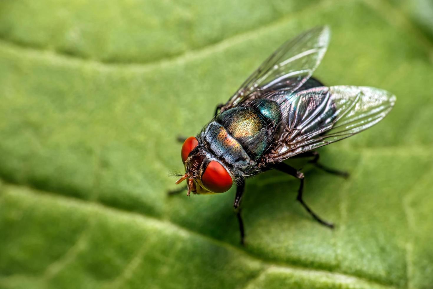 primo piano di mosche su una foglia foto