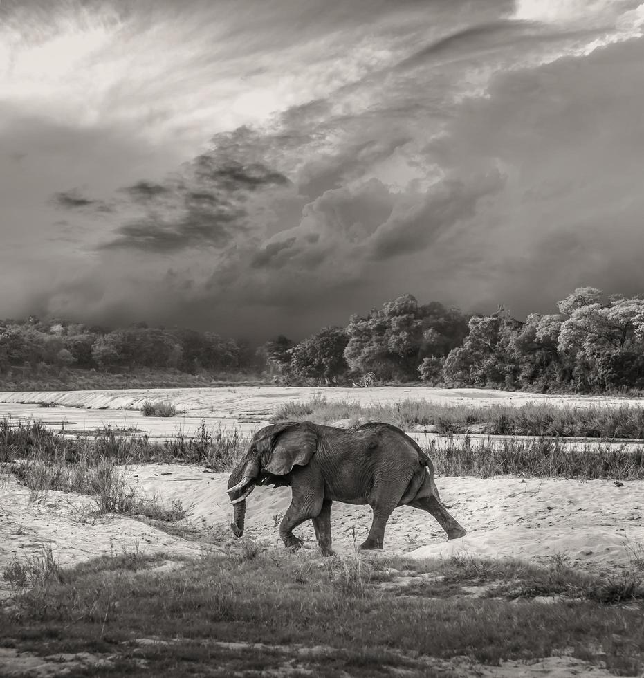 immagine toro elefante foto