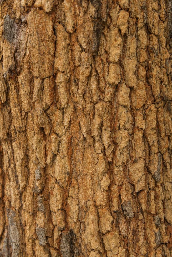 consistenza della corteccia d'albero pelle la corteccia di un albero che presenta screpolature foto