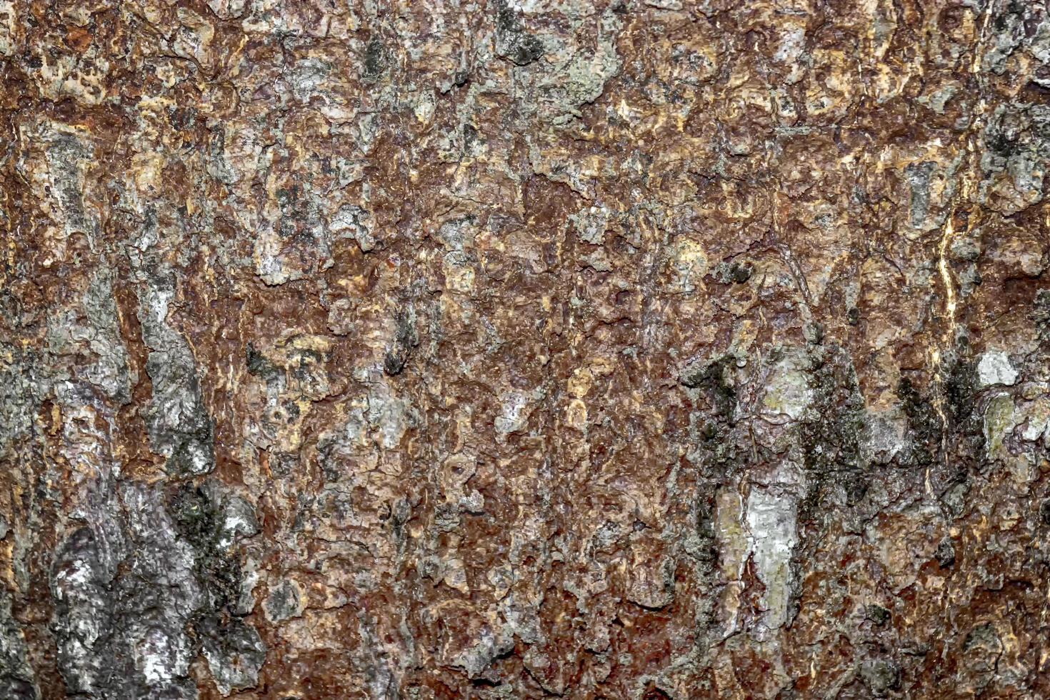 trama astratta della corteccia di un vecchio albero di mango foto