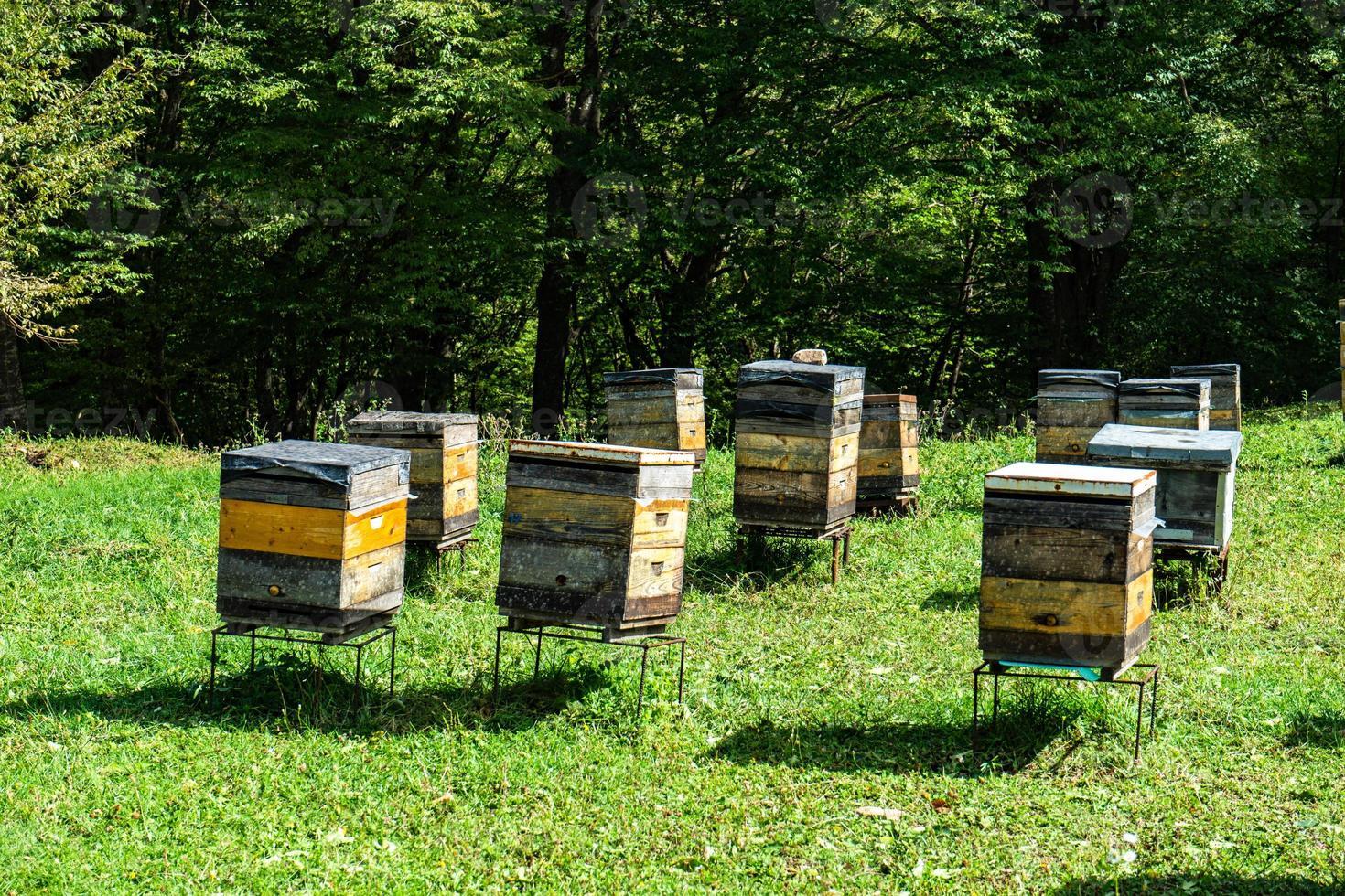 alveare di miele in dzveli shuamta foto