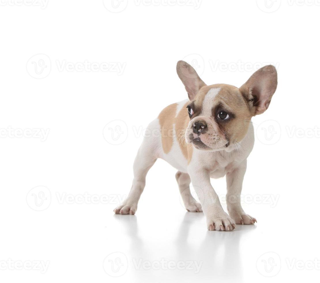 timido cucciolo di cane che guarda di lato foto