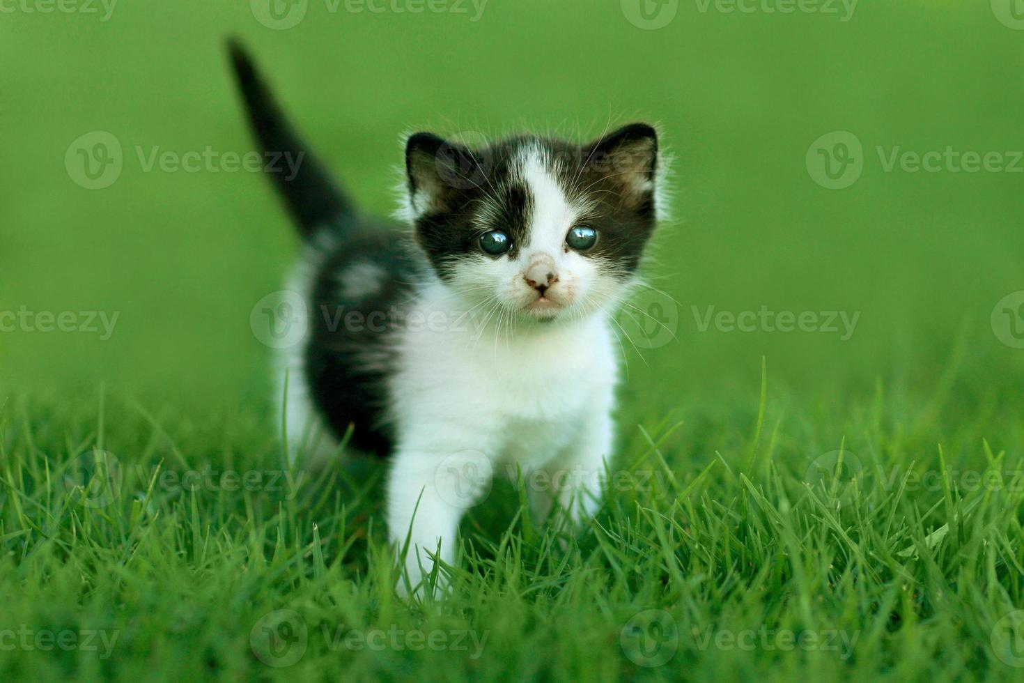 gattino all'aperto con luce naturale foto