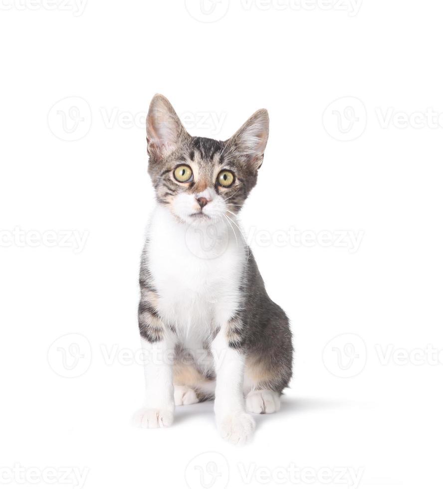 simpatico gattino seduto su bianco foto