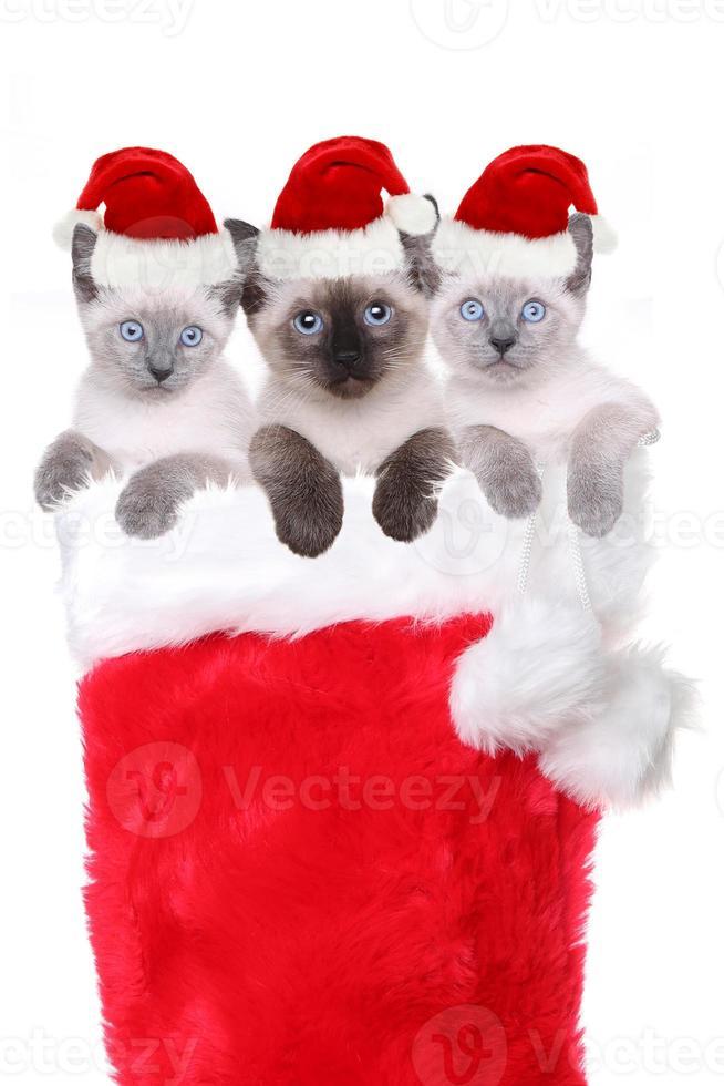 gattini in una calza che indossano cappelli di babbo natale foto