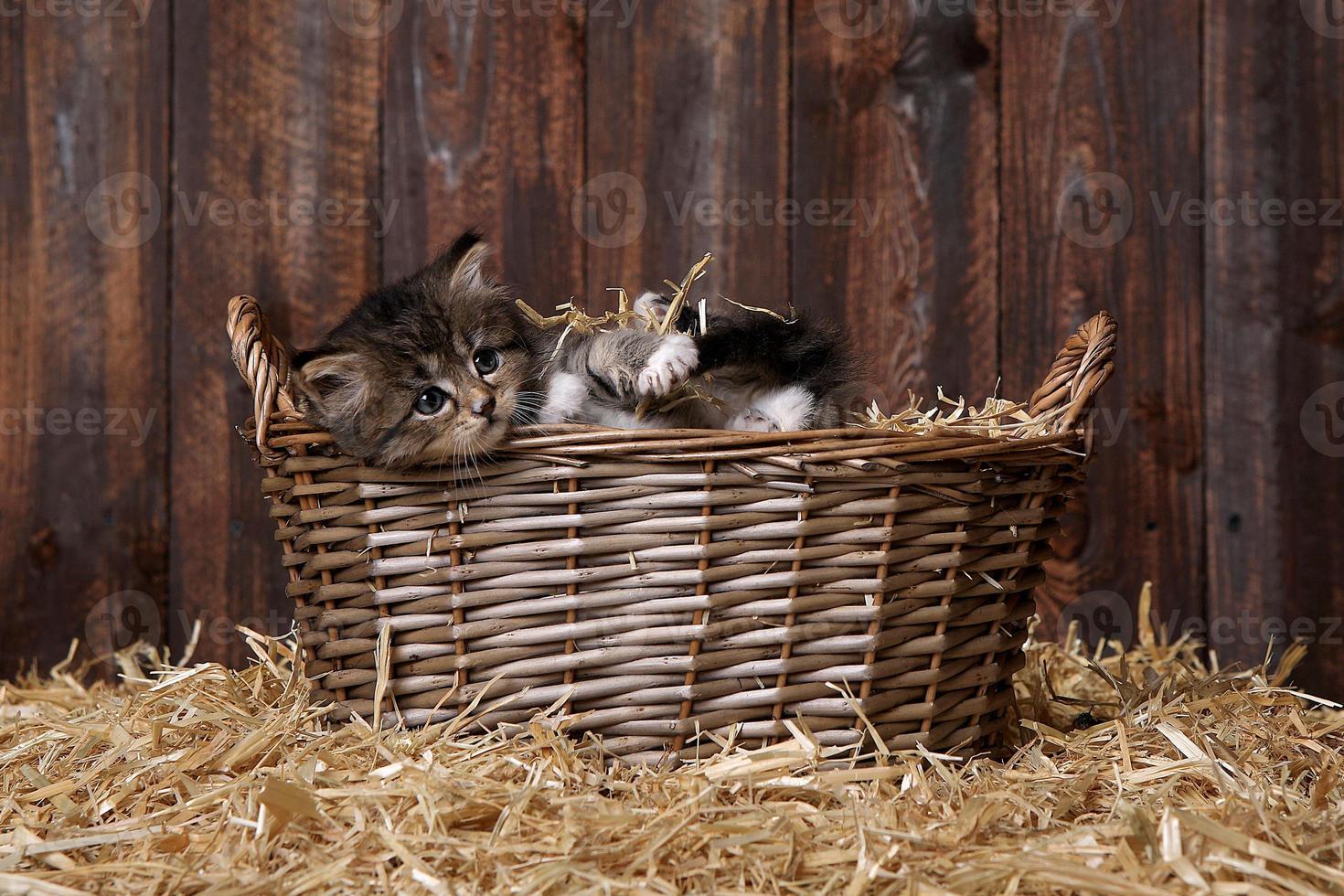 simpatico gattino con paglia in un fienile foto