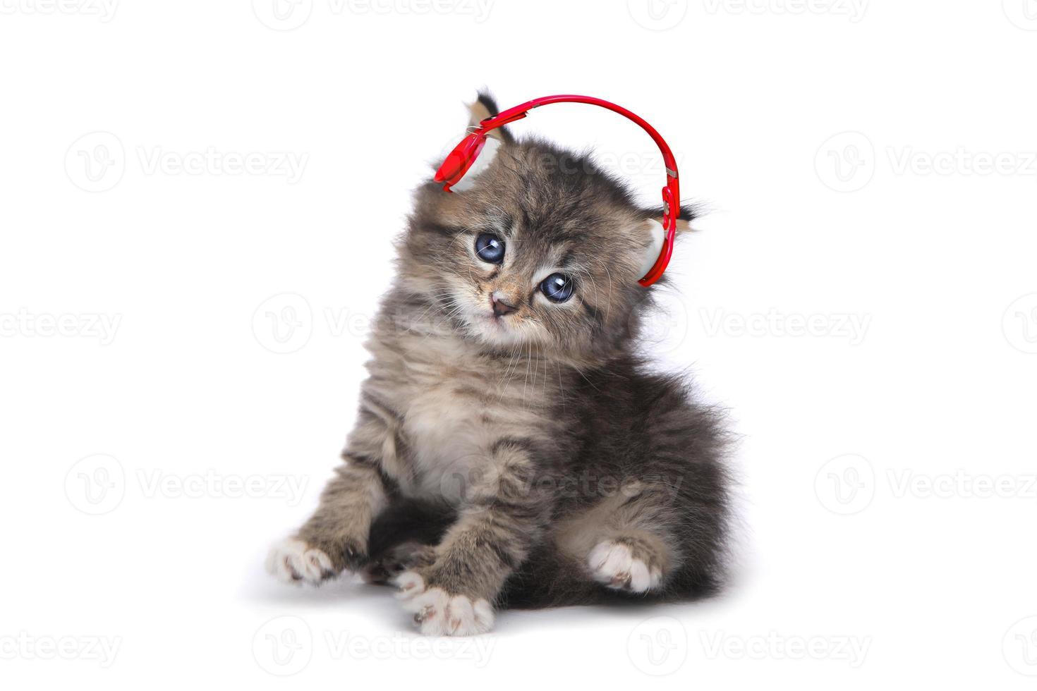 gattino su sfondo bianco che ascolta musica foto