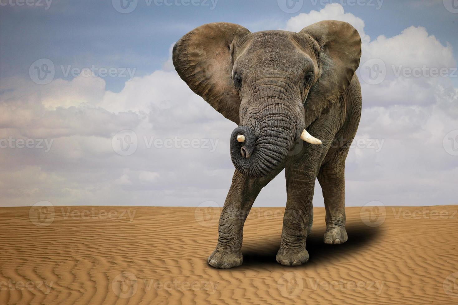 elefante africano solitario all'aperto alla luce del giorno foto