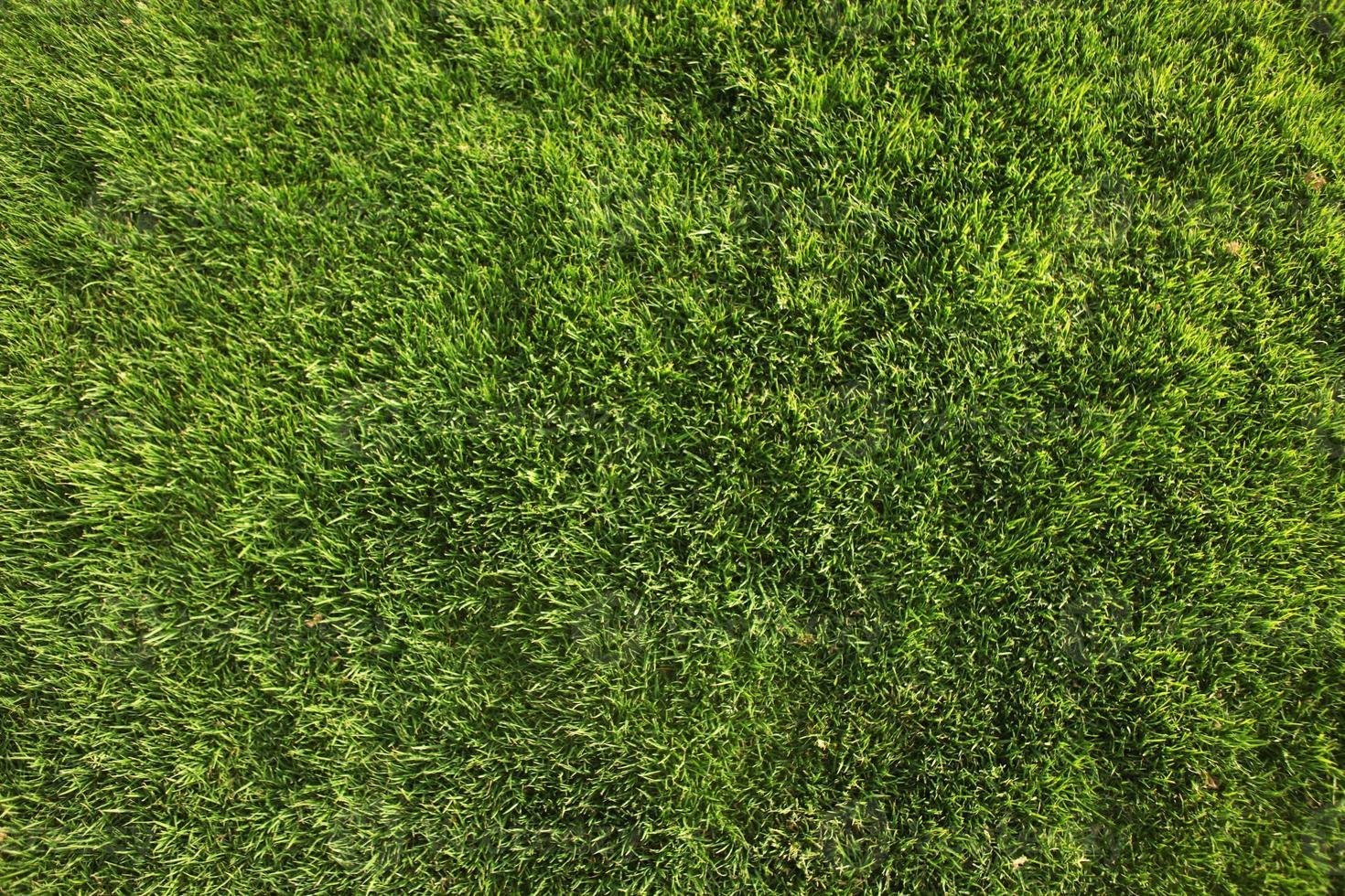 sfondo o trama perfetta dell'erba verde foto