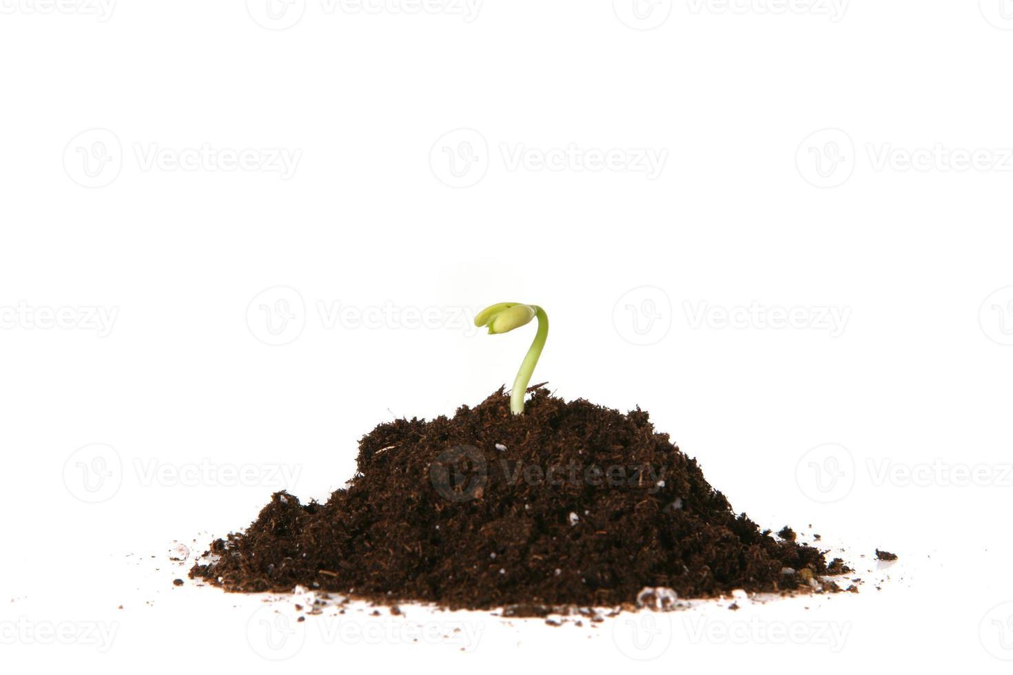 seme piantato che germoglia foto