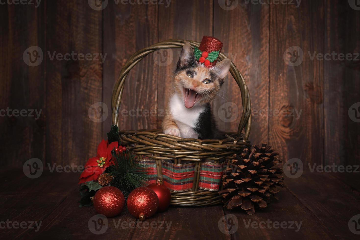 gattino calico a tema natalizio impostato su sfondo di legno foto
