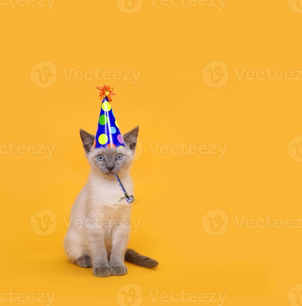 gatto da festa siamese tagliato che indossa un cappello di compleanno foto