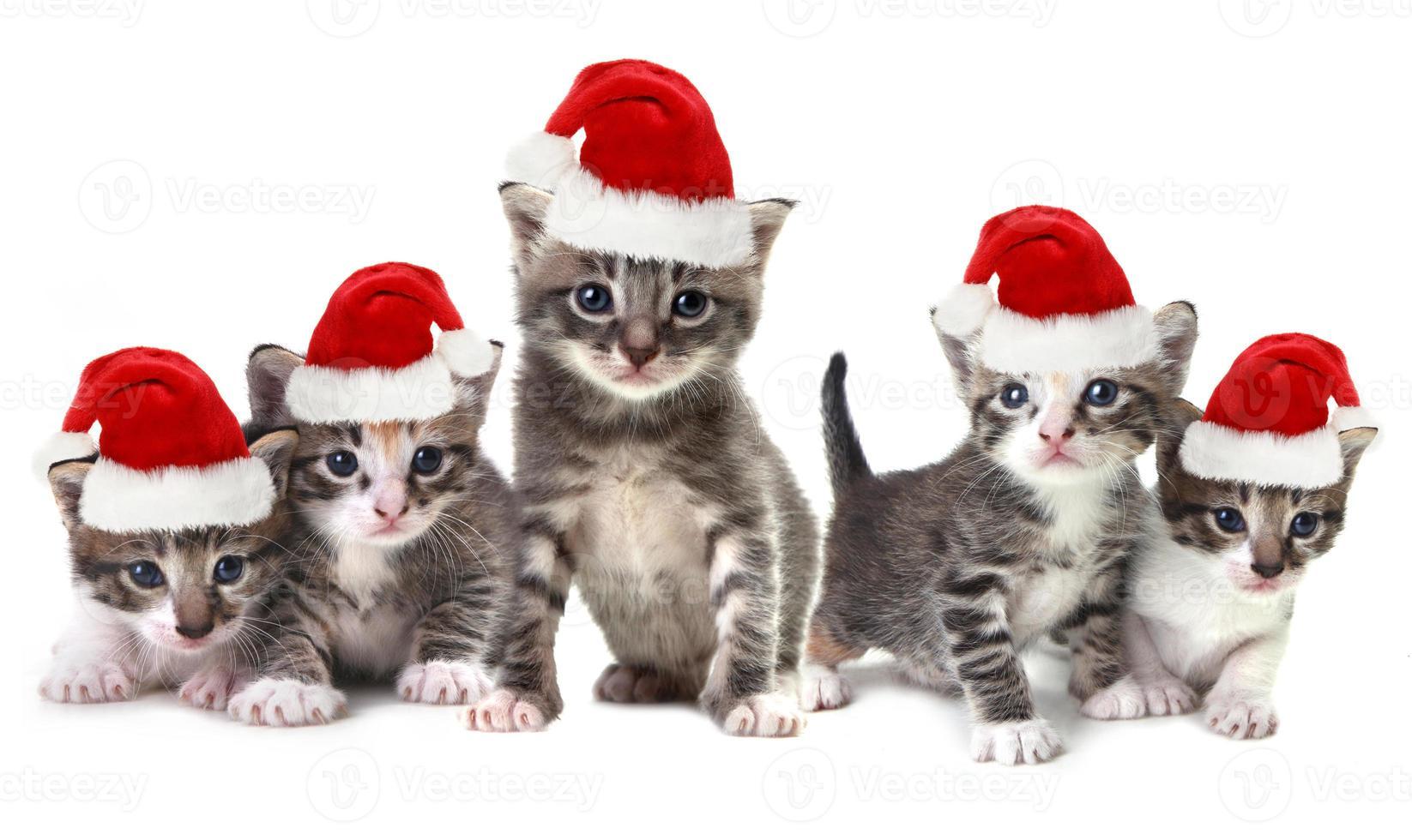 gattini di natale che indossano un cappello rosso su bianco foto