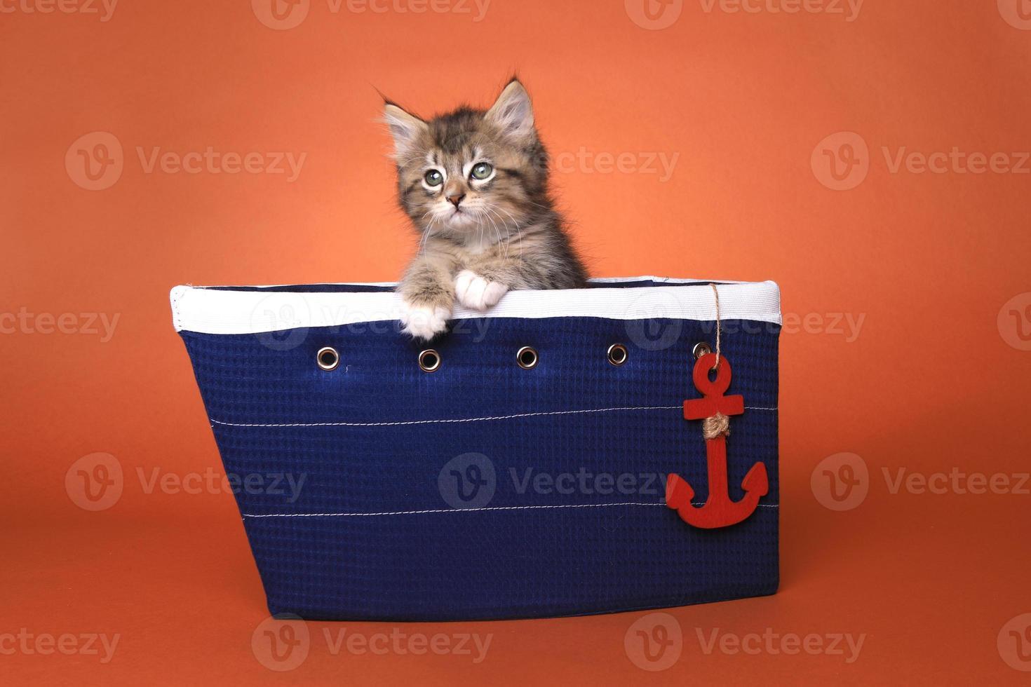 gattino maincoon con grandi occhi foto
