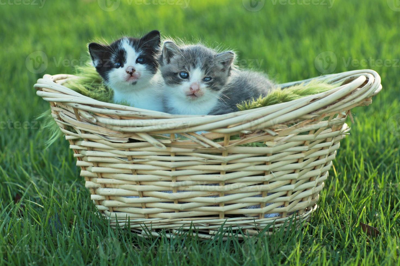gattini all'aperto alla luce naturale foto