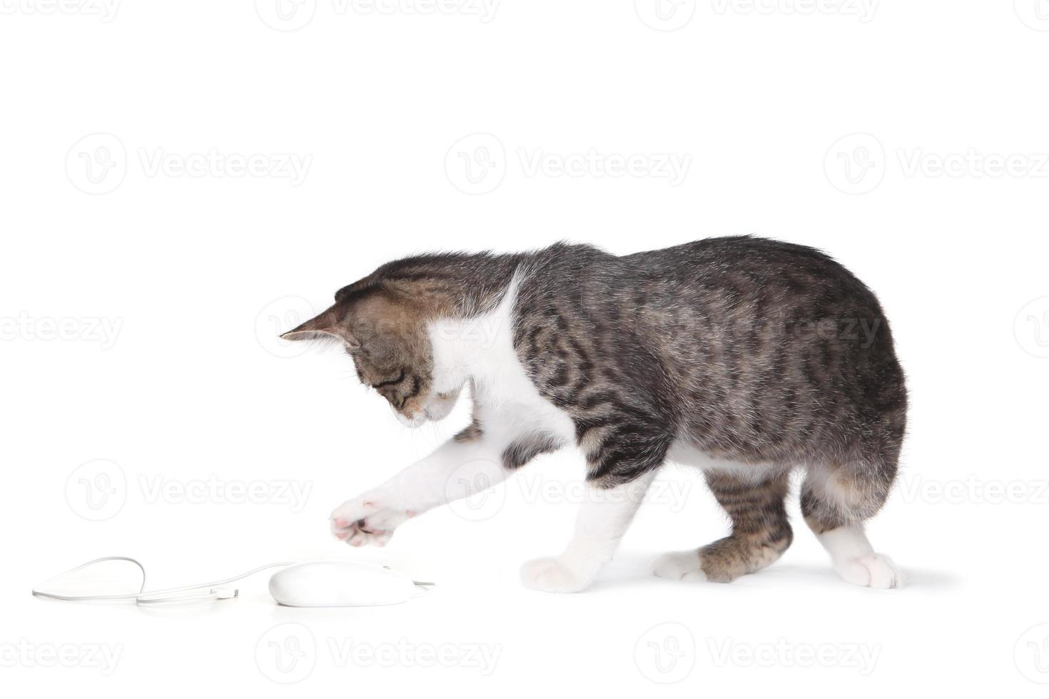 gattino che scalpita su un topo foto