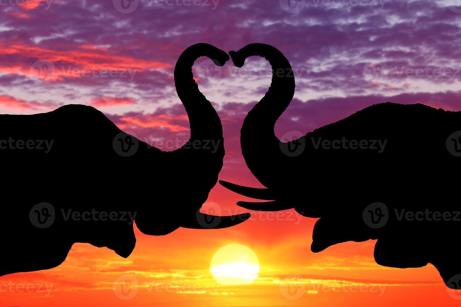 bella silhouette di elefanti africani al tramonto foto