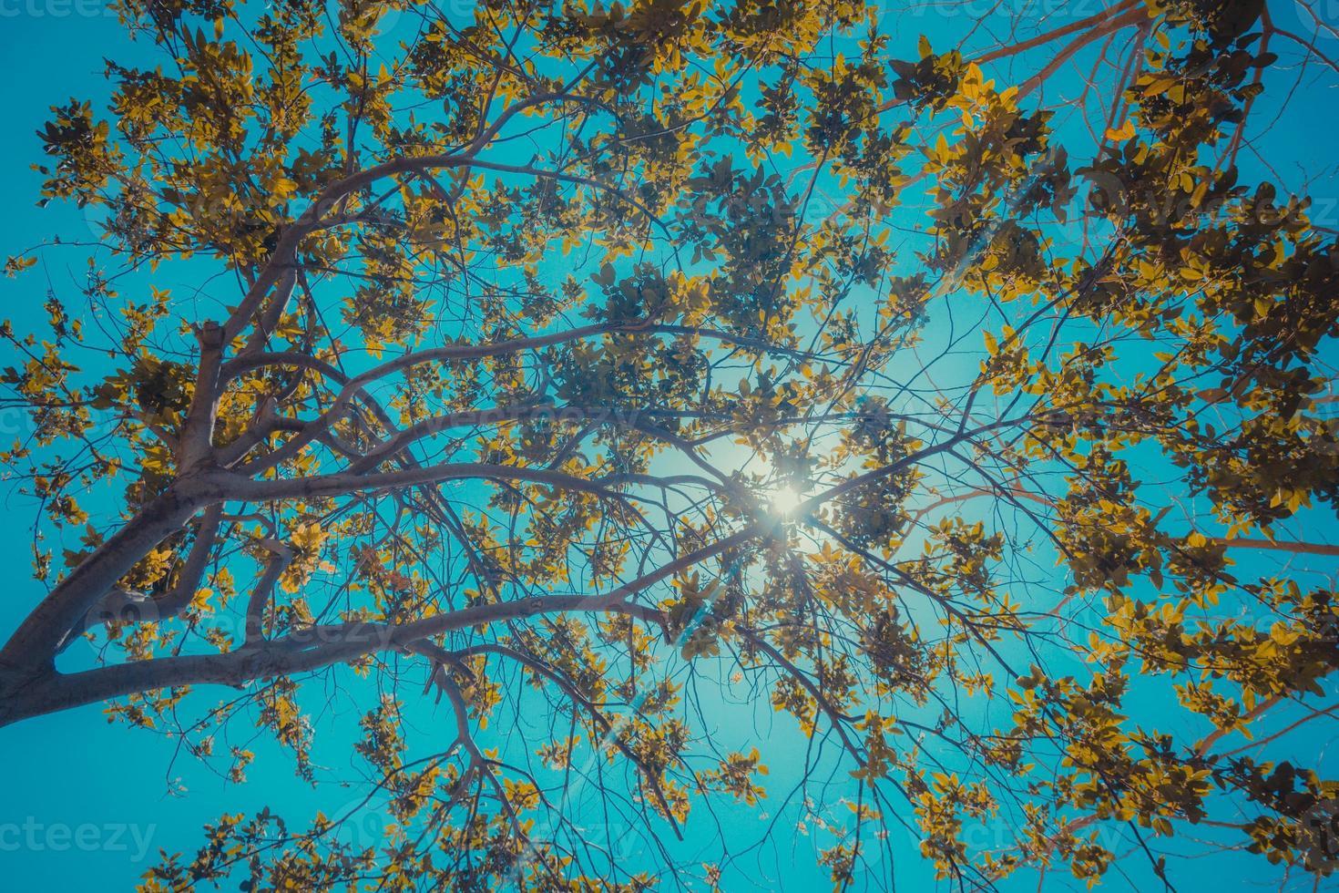 il sole fa capolino tra i rami foto