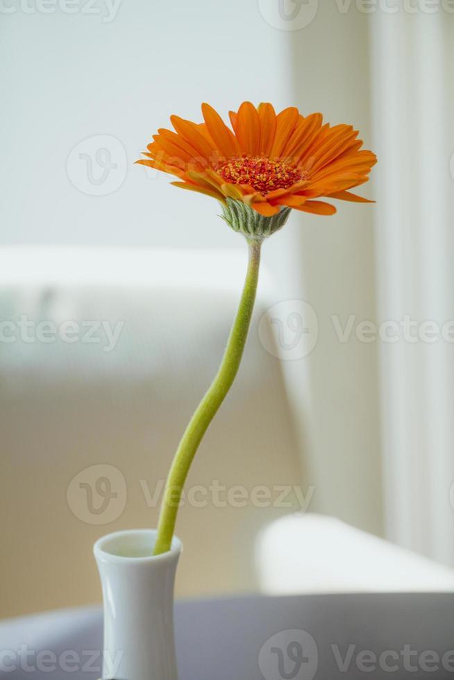 fiore di gerbera arancione in vaso bianco su sfondo bianco foto
