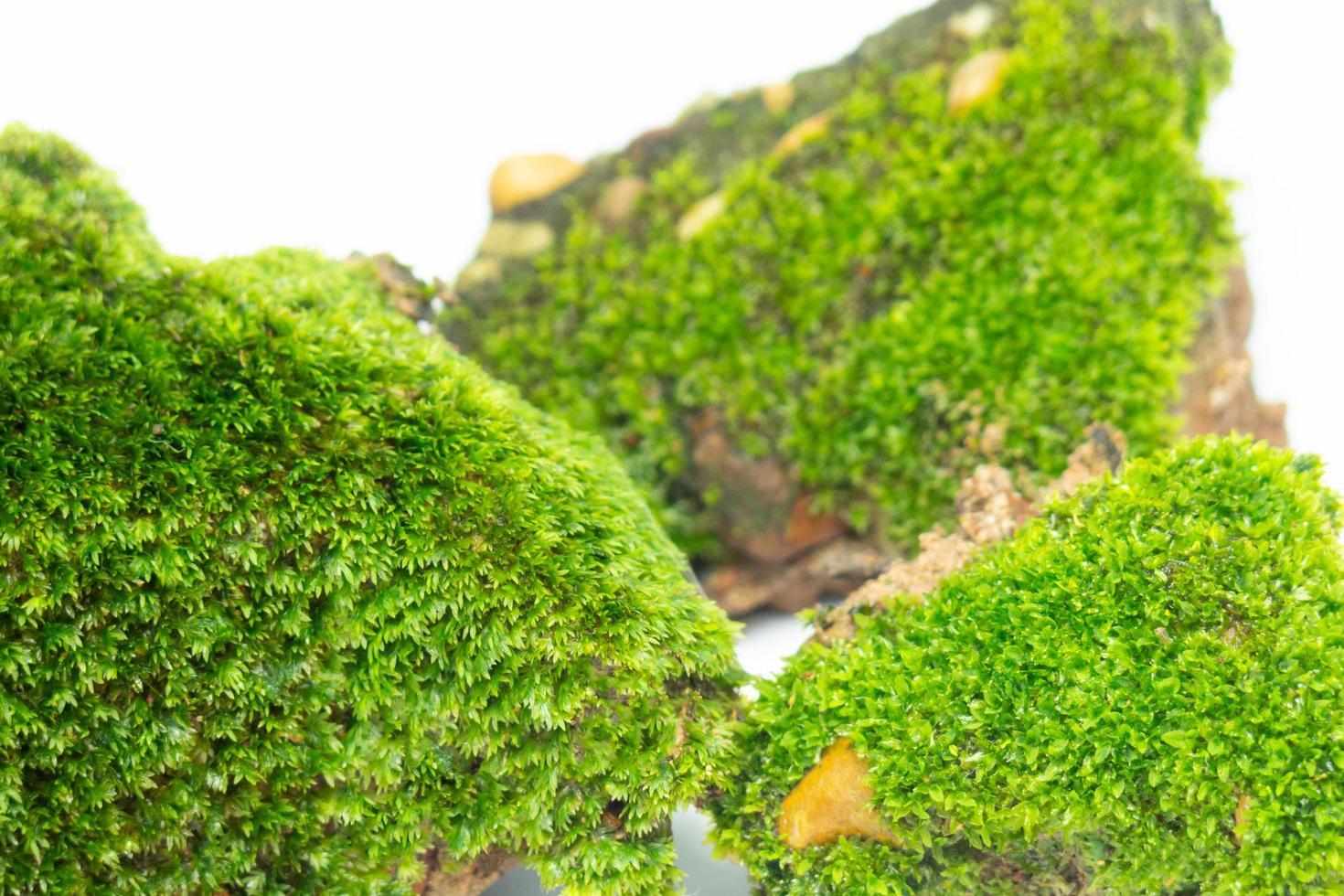 un primo piano della superficie del muschio verde. ambientato su uno sfondo bianco foto