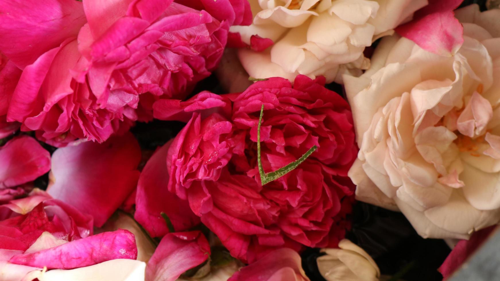 le rose rosse da vicino vengono utilizzate per eventi tradizionali foto