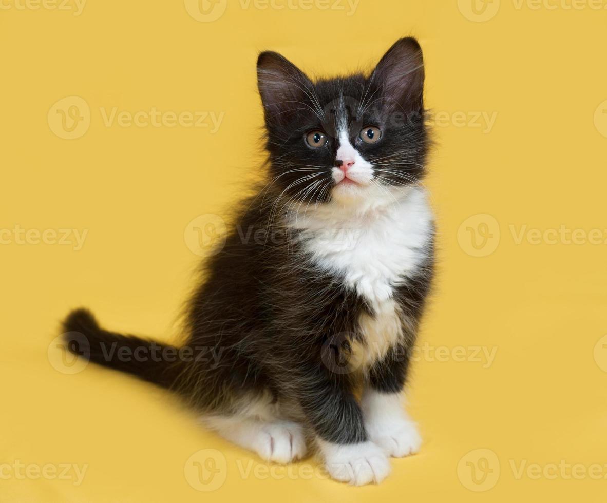 piccolo gattino in bianco e nero lanuginoso che si siede sul giallo foto