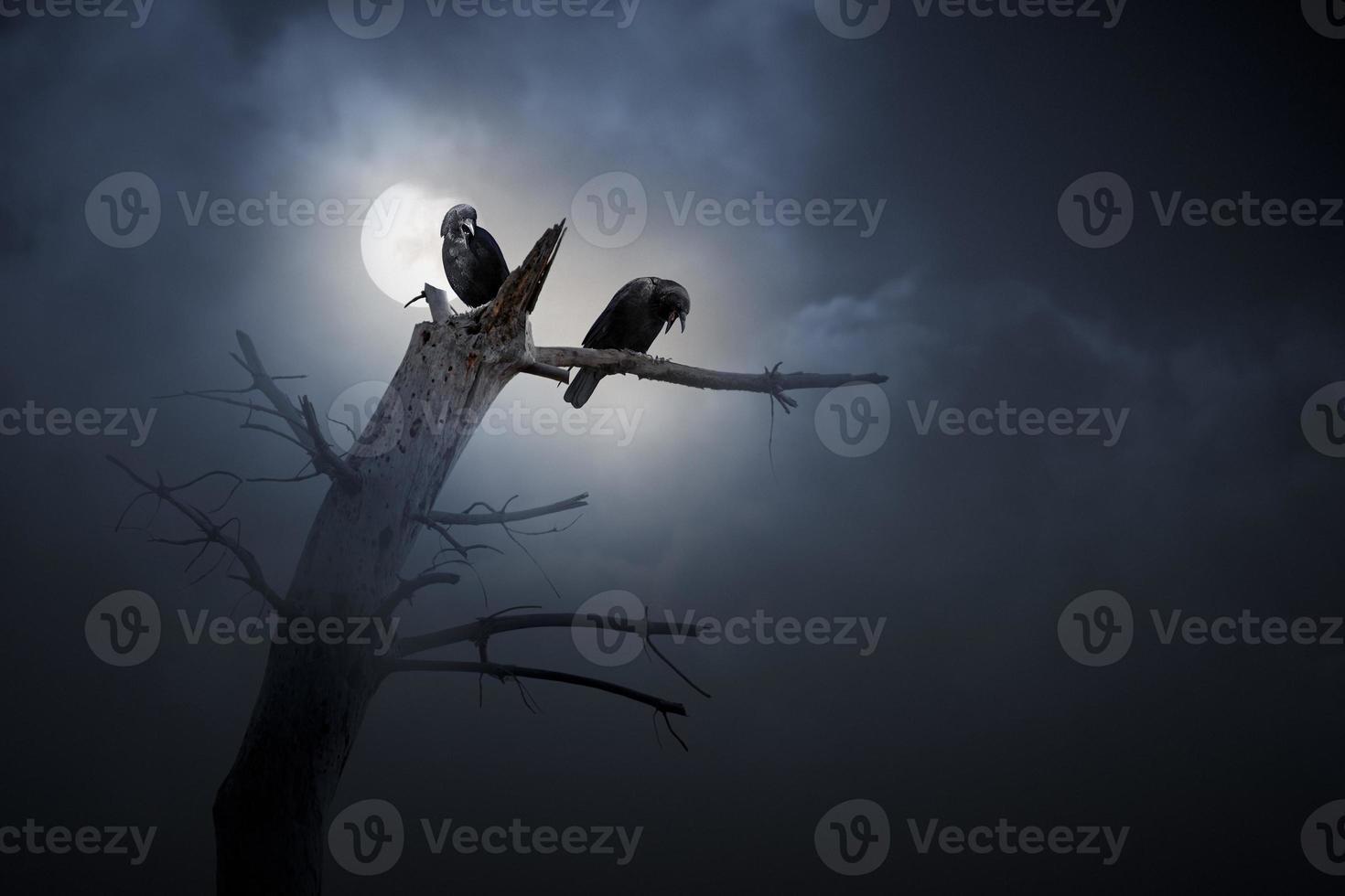 notte di corvi foto