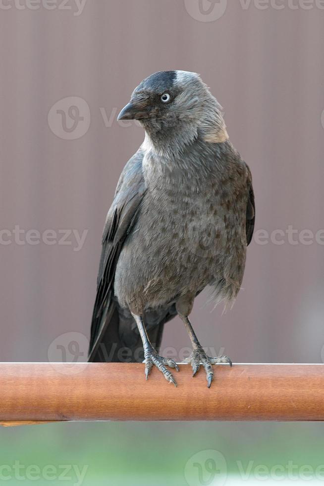 uccello urbano daw foto