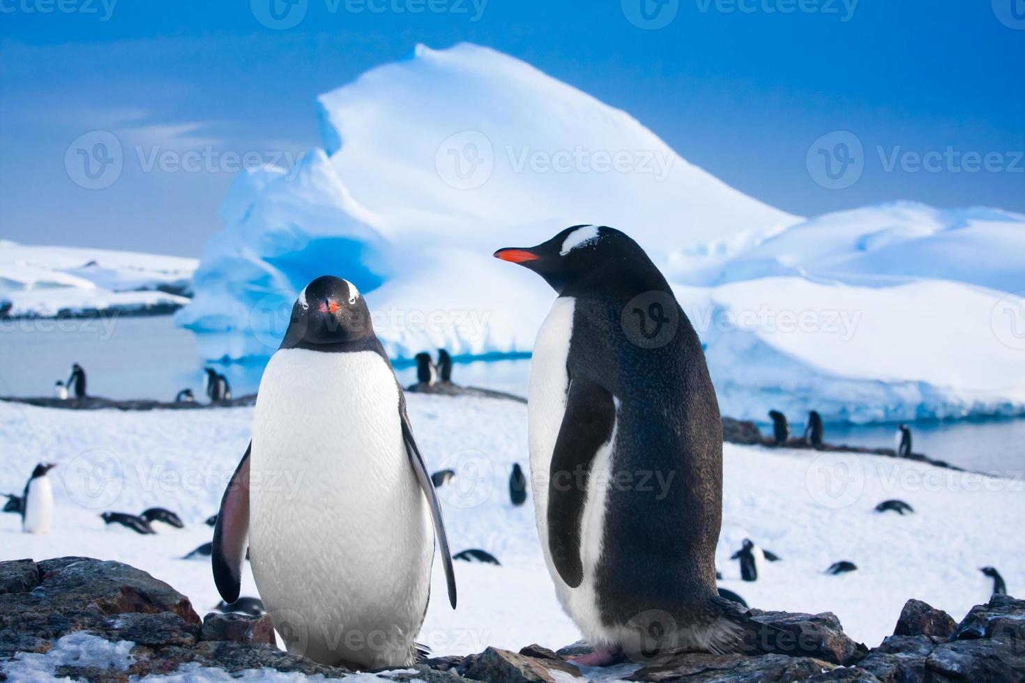 due pinguini che sognano foto
