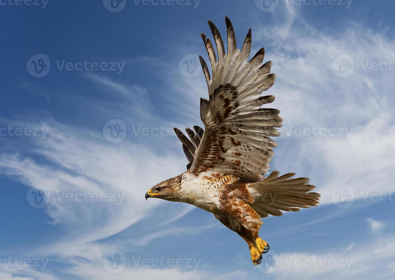 falco ferruginoso foto