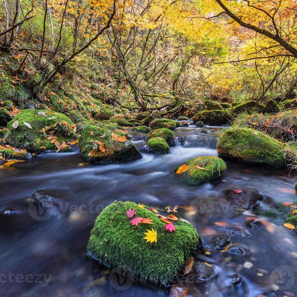 bella cascata nella foresta, paesaggio autunnale foto