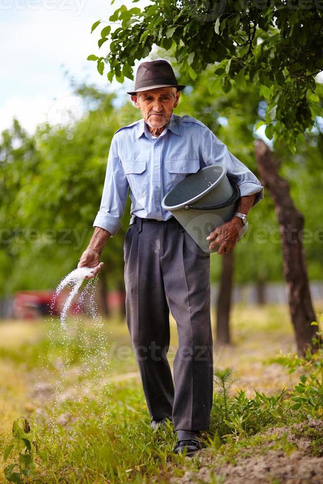 vecchio contadino che fertilizza in un frutteto foto