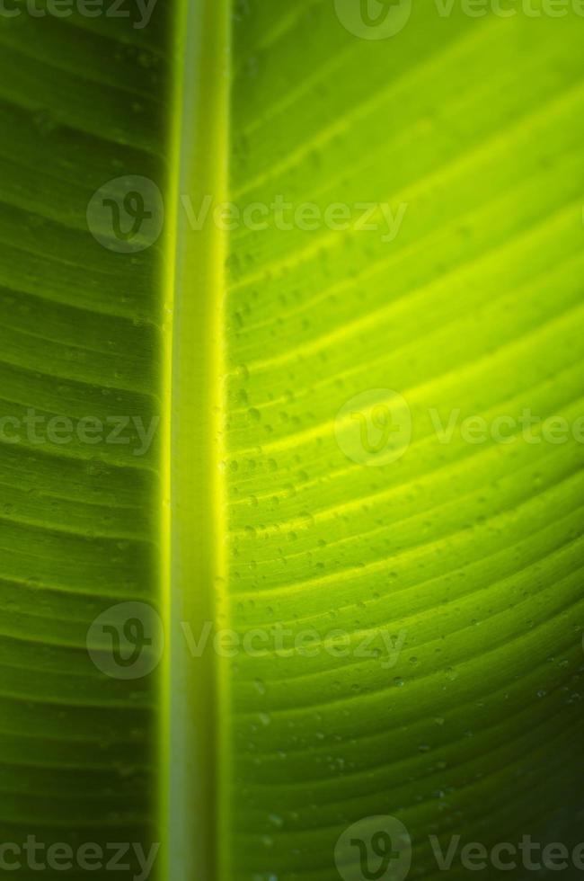 foglie di banana foto