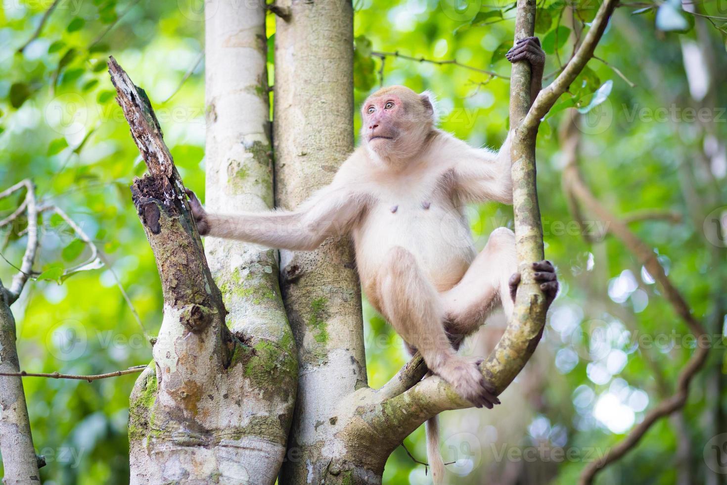 scimmia nella natura foto