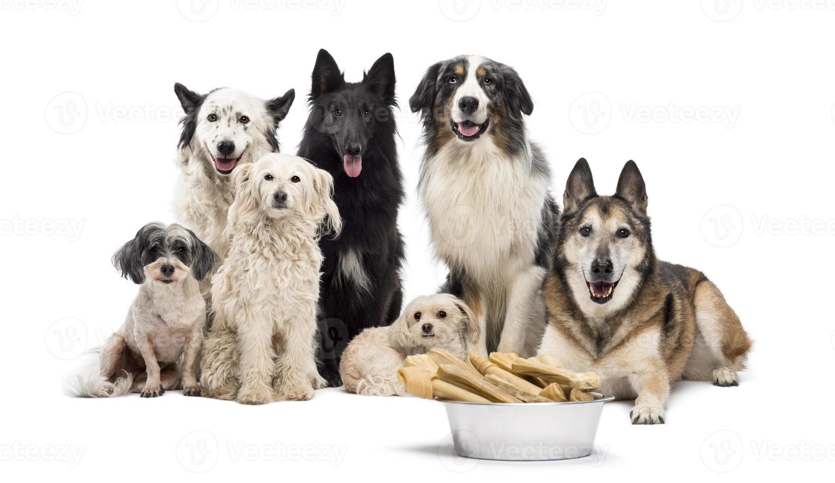 gruppo di cani con una ciotola piena foto