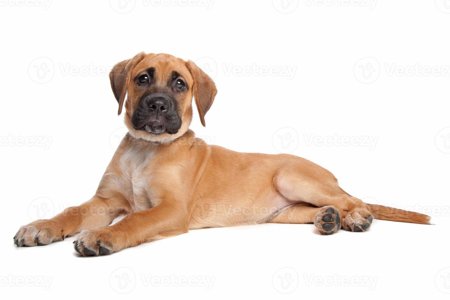 cucciolo di razza mista foto