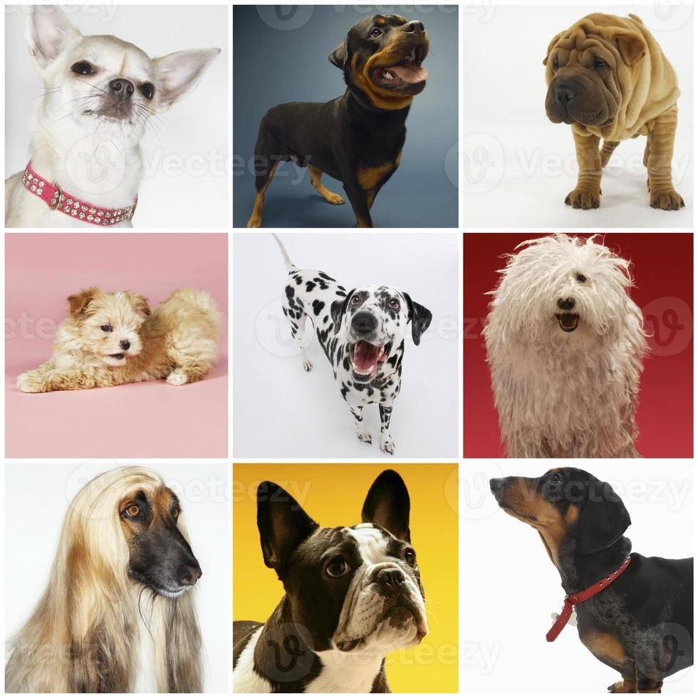 collage di vari cani da compagnia foto