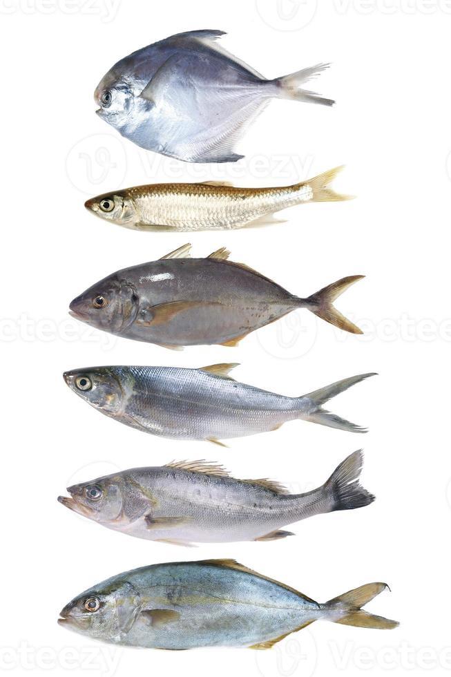 pesce isolato foto