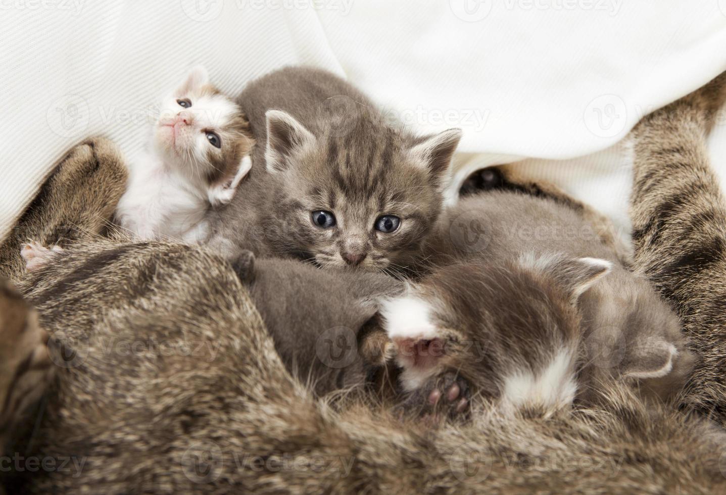 gatti neonati allattati foto