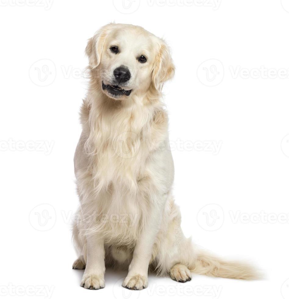 golden retriever che si siede e che esamina macchina fotografica contro il fondo bianco foto