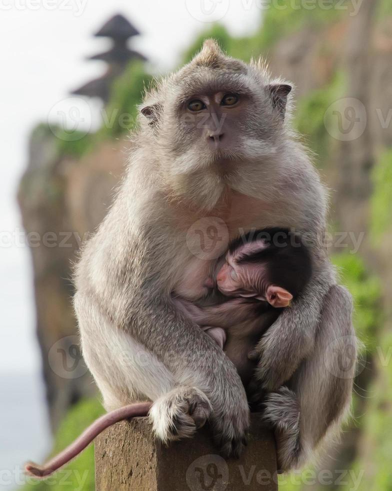 scimmia da lattazione foto
